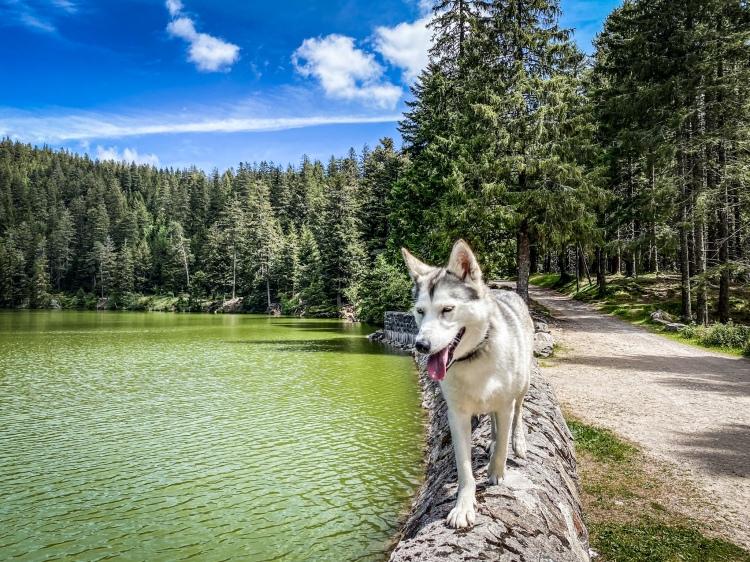 Oka se balade au Lac Vert, dans le massif des Vosges / Crédit photo - Pierrick Aubert